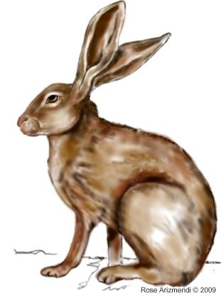 Jack Rabbit #3