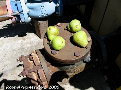 Tablleau of Four Pears
